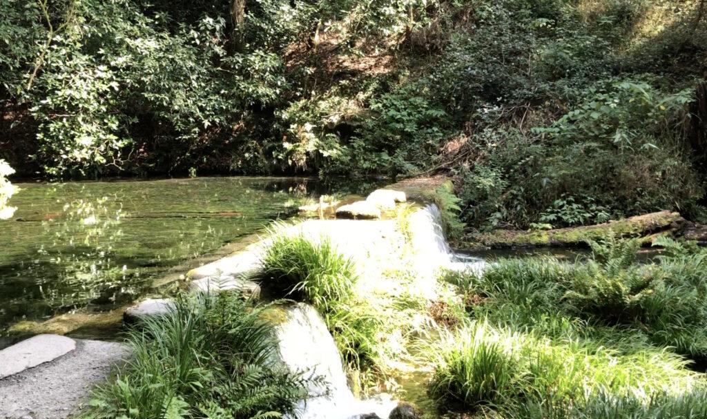 大分の池山水源